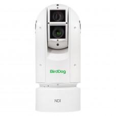 BirdDog Eyes A300 IP67 SDI NDI PTZ Camera